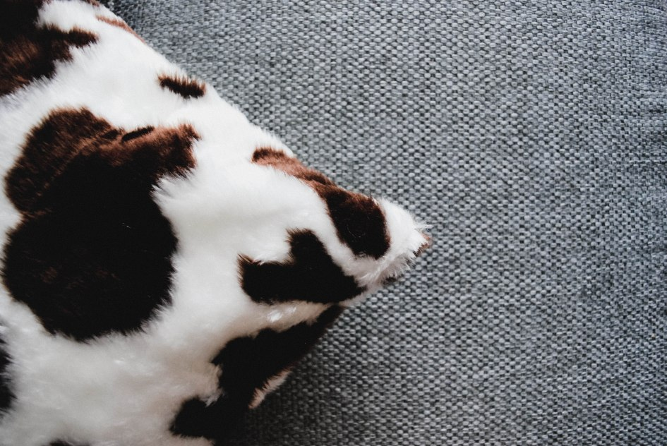 cow print cushion
